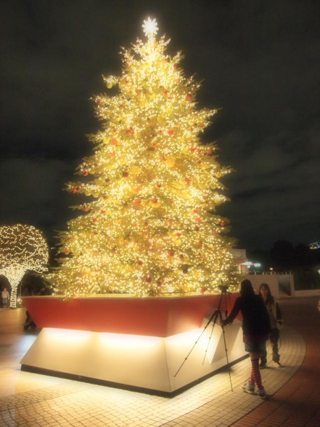 2010_11_23_tree02