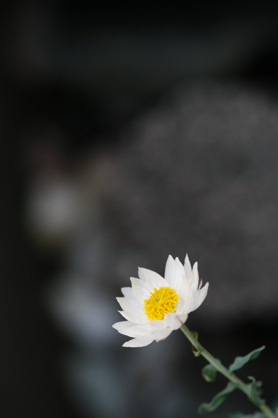 2011_04_niwa02