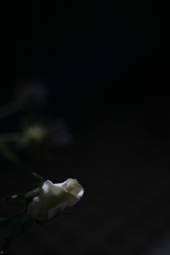 2011_03_hana05